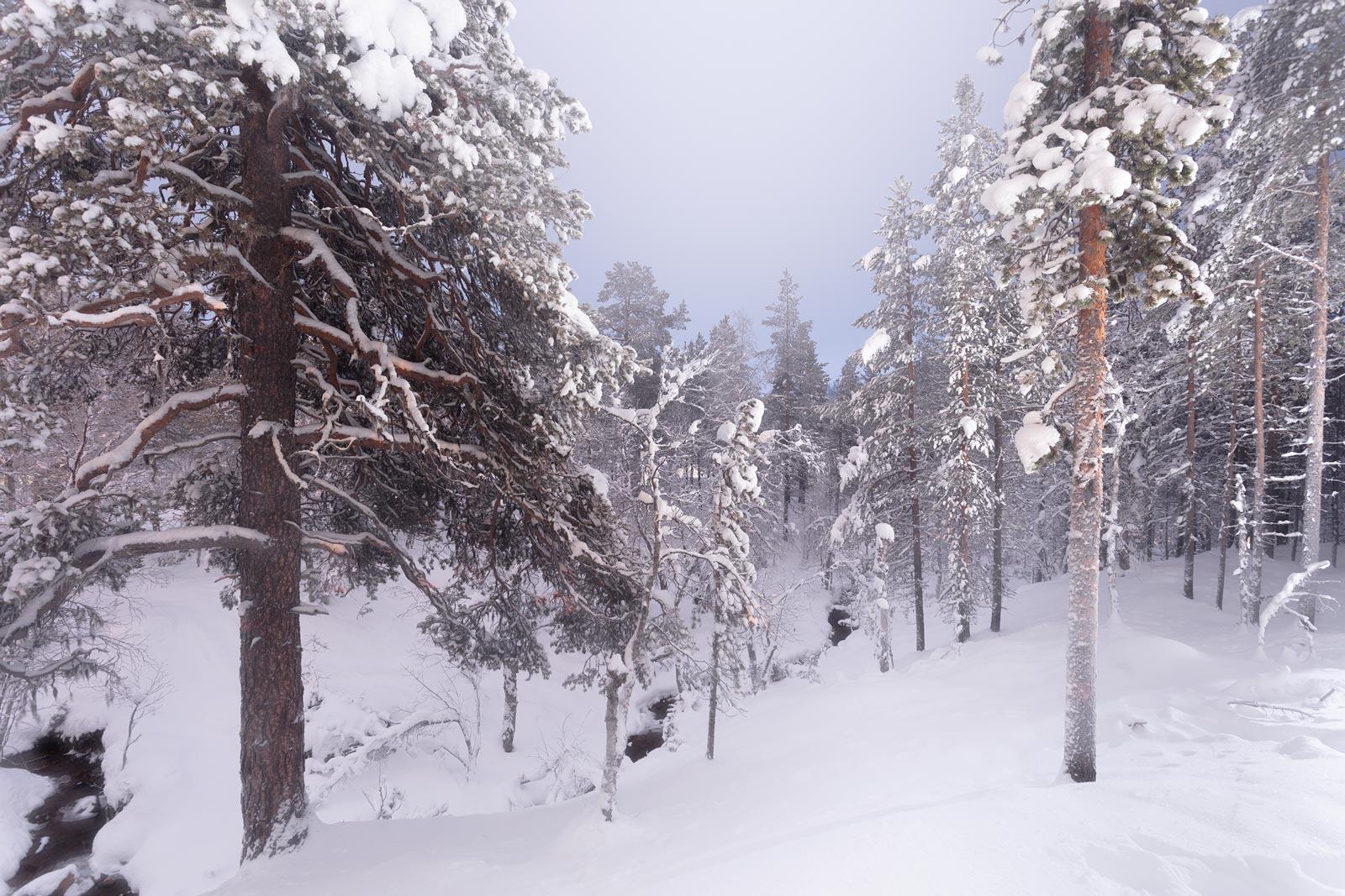 Lapland 3